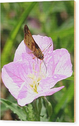 Wood Print featuring the photograph Skipper On A Primrose by Paula Tohline Calhoun