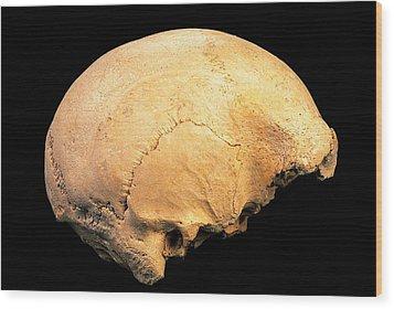 Skull 4, Sima De Los Huesos Wood Print by Javier Truebamsf