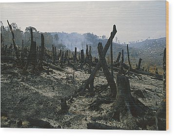 Slash And Burn Agriculture, Where Wood Print by Konrad Wothe