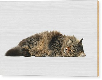 Sleeping Cat Wood Print by © Nico Piotto