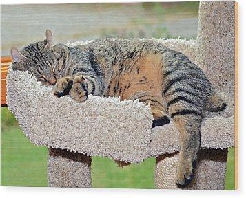 Sleeping Cat Wood Print by Susan Leggett