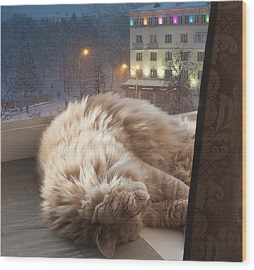 Sleeping Cat Wood Print by Vladimir Kholostykh