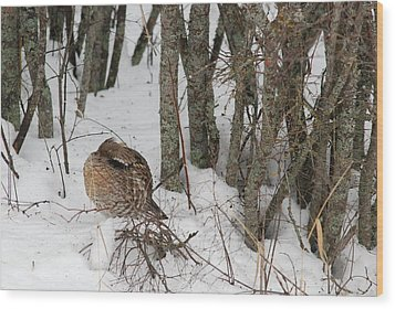Sleeping Grouse On Snow Wood Print