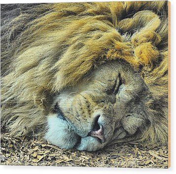 Sleeping Lion Wood Print by Chris Thaxter