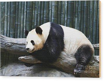 Sleeping Panda Wood Print