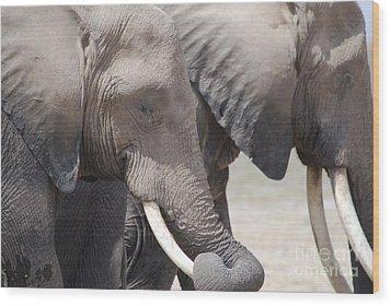 Sleepy Elephants Wood Print by Alan Clifford