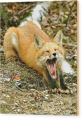 Wood Print featuring the photograph Sleepy Fox by Rick Frost