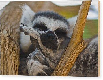 Sleepy Lemur Wood Print