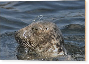 Sleepy Seal Wood Print