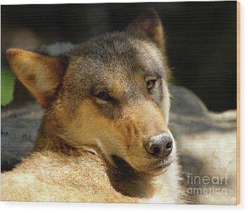 Sleepy Wolf Wood Print by Charles Lupica