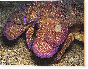 Slipper Lobster On Seabed Wood Print by Sami Sarkis