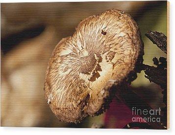 Small Brown Mushroom  Wood Print by Wilma  Birdwell