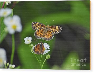 Small Butterfly Wood Print