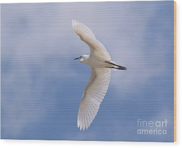 Wood Print featuring the photograph Small Egret Flying Over The House by John  Kolenberg