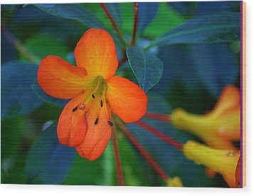 Small Orange Flower Wood Print by Tikvah's Hope