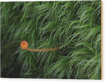 Small Orange Mushroom In Moss Wood Print