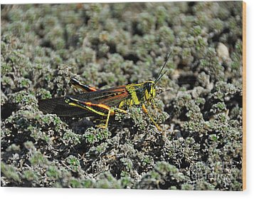 Small Painted Locust Wood Print by Sami Sarkis