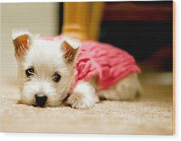 Small Puppy Sleeping On Mat Wood Print by James DiBianco Jr