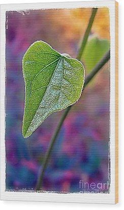 Smilax Wood Print by Judi Bagwell