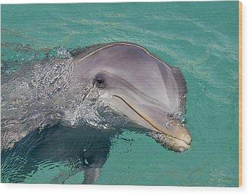 Smiling Atlantic Bottlenose Dolphin Wood Print by Dave Fleetham