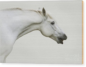 Smiling Grey Pony Wood Print