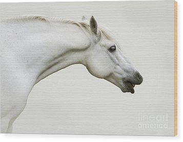 Smiling Grey Pony Wood Print by Ethiriel  Photography