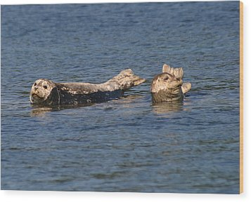 Smiling Seals Of Puget Sound Wood Print by Kym Backland