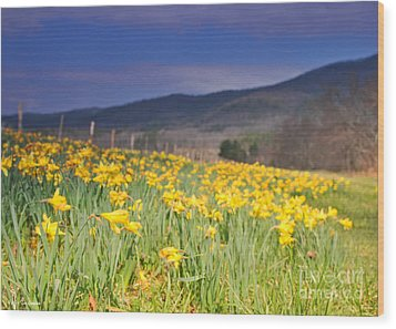Smoky Mountain National Park Daffodil Spring Wood Print by Nature Scapes Fine Art