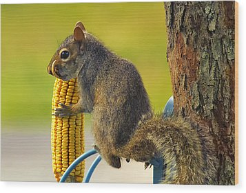 Snaggletooth Squirrel With Corn Wood Print by Bill Tiepelman