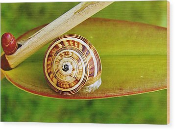 Wood Print featuring the photograph Snail On Leaf by Werner Lehmann