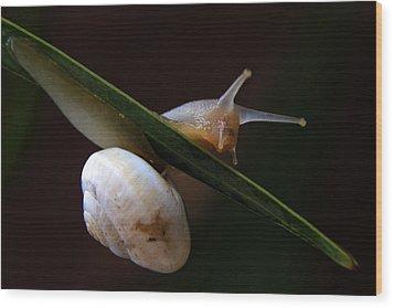 Snail Wood Print by Stelios Kleanthous