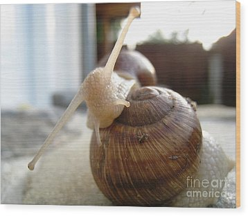 Snails 10 Wood Print by AmaS Art