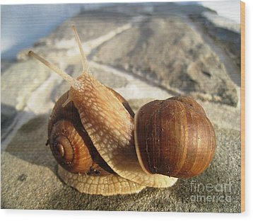 Snails 11 Wood Print by AmaS Art