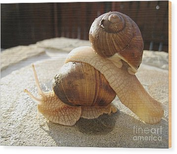 Snails 17 Wood Print by AmaS Art