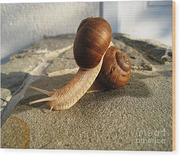 Snails 18 Wood Print by AmaS Art