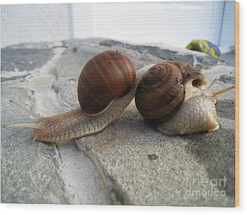 Snails 19 Wood Print by AmaS Art