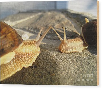 Snails 2 Wood Print by AmaS Art