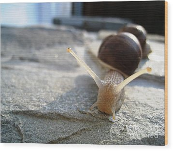 Snails 20 Wood Print by AmaS Art