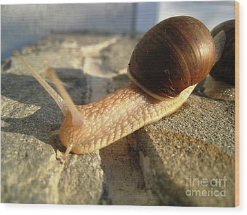 Snails 21 Wood Print by AmaS Art
