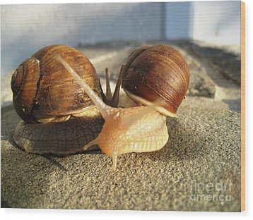 Snails 22 Wood Print by AmaS Art