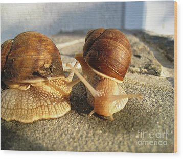 Snails 23 Wood Print by AmaS Art