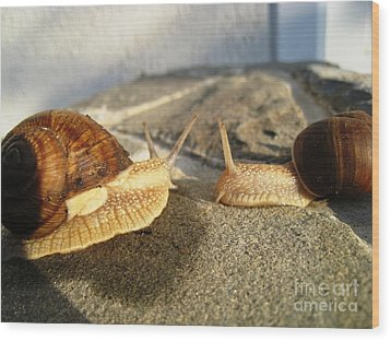 Snails 3 Wood Print by AmaS Art