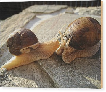 Snails 5 Wood Print by AmaS Art