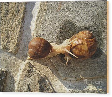Snails 8 Wood Print by AmaS Art