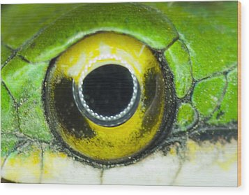 Wood Print featuring the photograph Snake Eye by John Burns