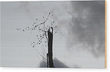 Snapped Wood Print