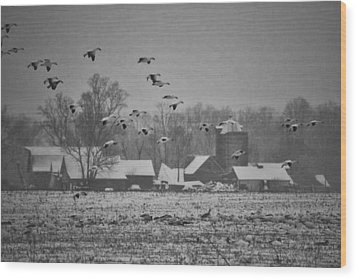 Wood Print featuring the photograph Snow Geese by Kelly Reber