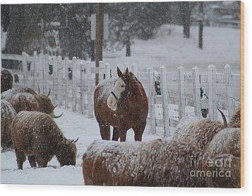Snow Horse Wood Print by Linda Jackson