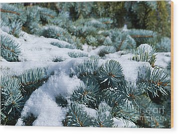 Snow In The Pines Wood Print