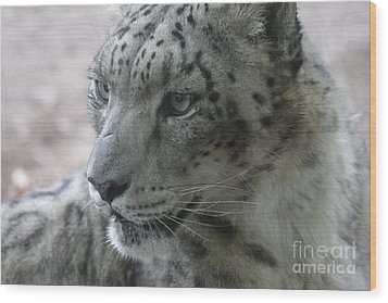 Snow Leopard Profile Wood Print by Chris Hill